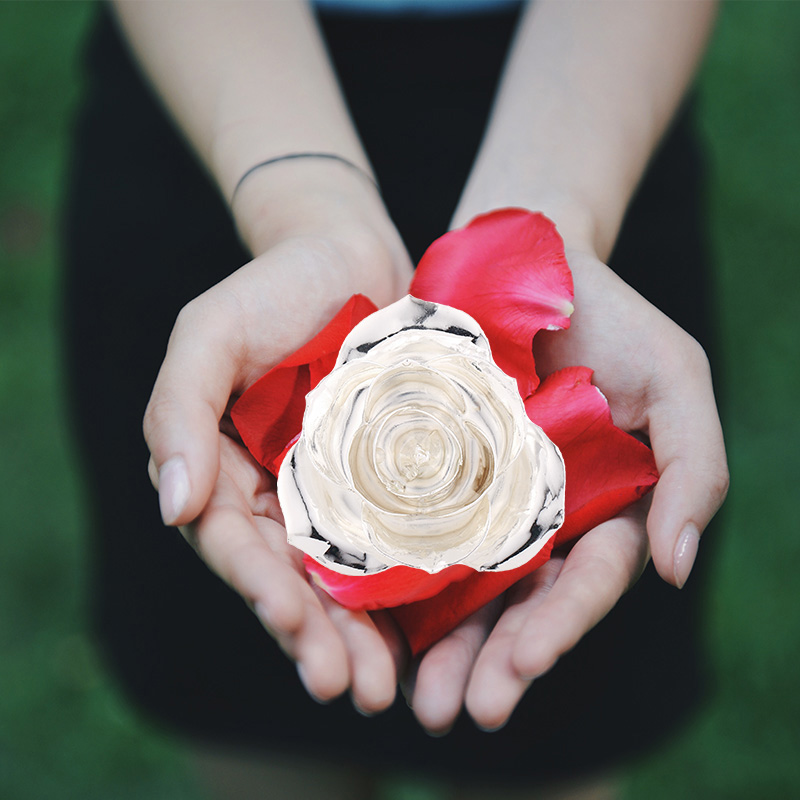 Love Is A Silver Rose (natural Rose)